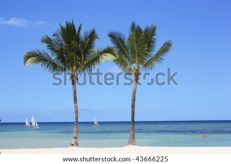 Two Palm Trees - stock photo