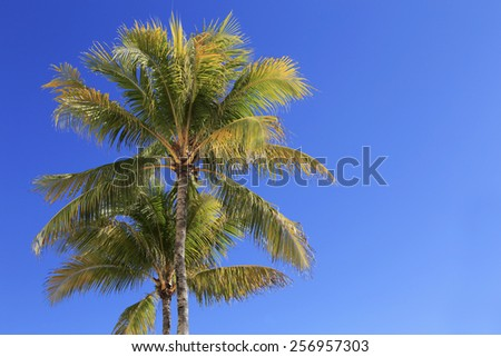 Two Palm trees against a blue sky. Miami beach, Florida. - stock photo