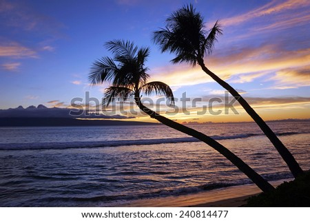Two palm trees in tropical sunset     - stock photo