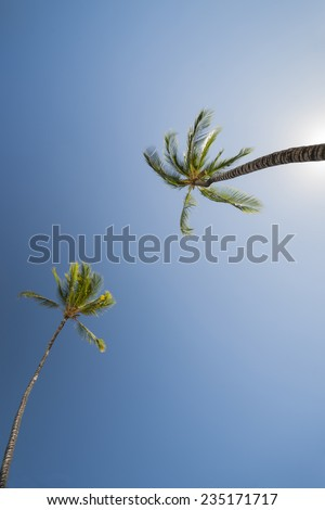 two Palm trees, low angle view against blue sky. - stock photo