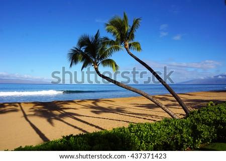 Two palm trees, Maui, Hawaii                                - stock photo