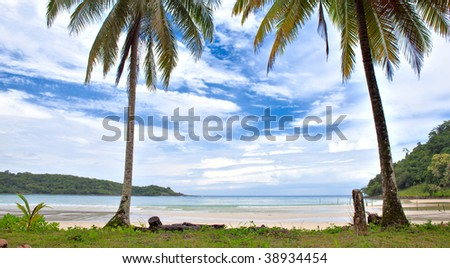 Two palms near the sea - stock photo
