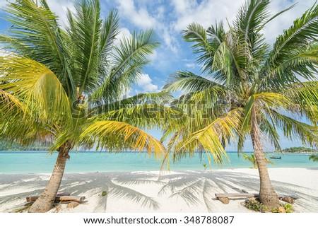 Two palms on the tropical beach.  Thailand. Koh Lipe island.  - stock photo