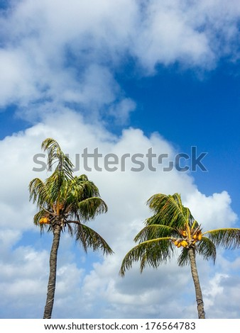 Two PalmTrees. - stock photo