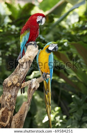 Two parrot in green rainforest. Outdoor. - stock photo