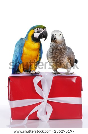 Two parrots on a Christmas gift - stock photo