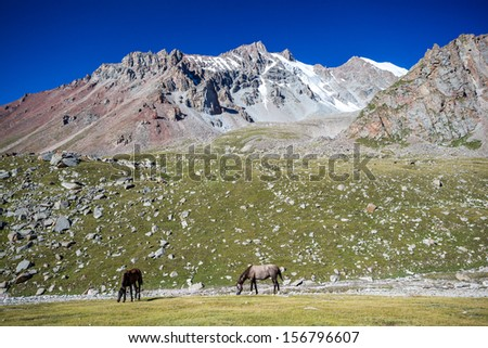 Two pasturing horses at sunny day in high snowy mountains, Tien Shan, Kyrgyzstan - stock photo
