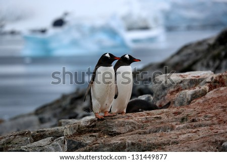 Two penguins on a rock in Antarctica - stock photo