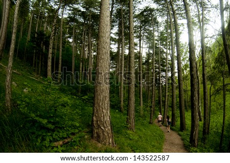 Two people walk down a path in an Austrian Forest - stock photo