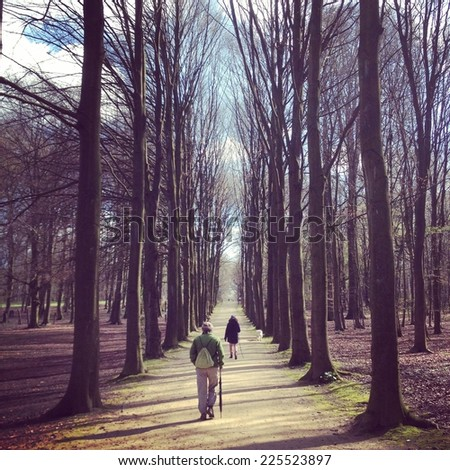 Two people walking down a path lined with tall bare trees. - stock photo