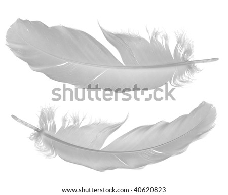 two pigeon feathers isolated on white background - stock photo