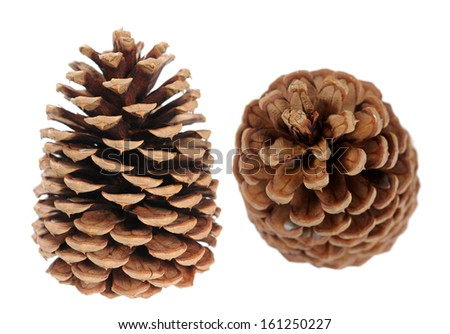 two pine cones isolated on white  - stock photo