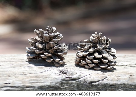 Two pine cones on the ground - stock photo