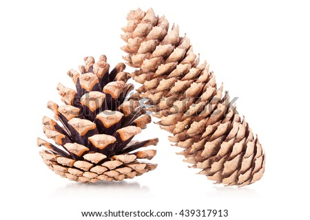 two pinecones isolated on white background - stock photo