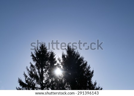Two pines and sun - stock photo