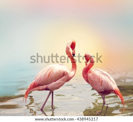 Two Pink Flamingos near water - stock photo