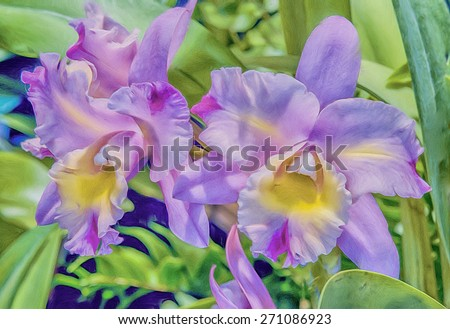 Two pink,yellow cattlyea orchids,digital oil painting - stock photo