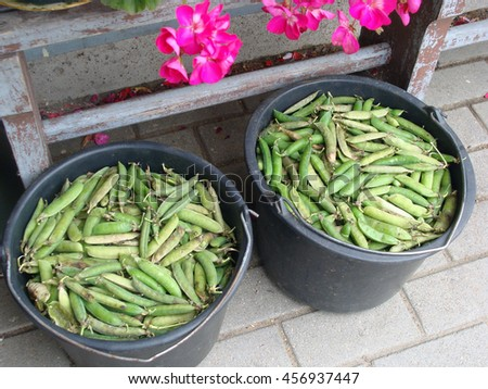 Two plastic baskets full with overripe peas pods outdoor on footpath.                            - stock photo