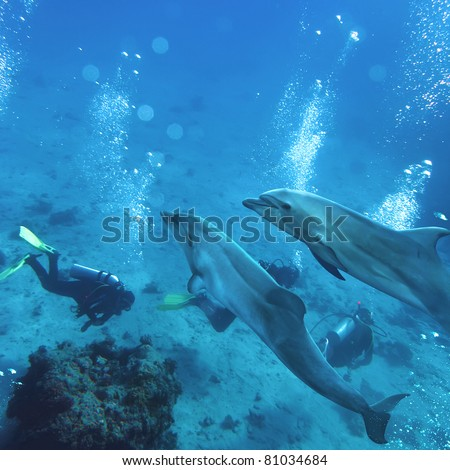 two playful dolphins swimming underwater above group of divers - stock photo