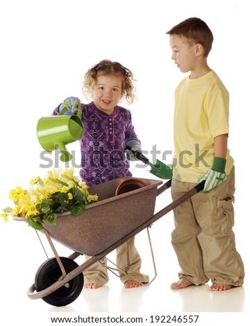 Two preschooler gardeners tending flowers in a wheelbarrow.  On a white background. - stock photo