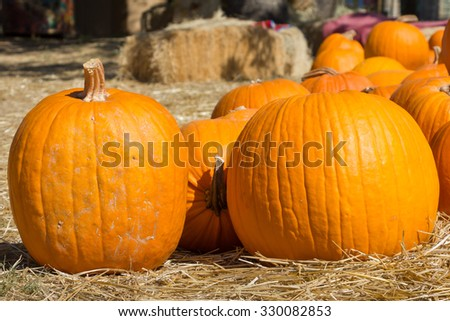 two pumpkins - stock photo