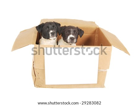 Two puppies in a cardboard box with a blank sign on the front. - stock photo