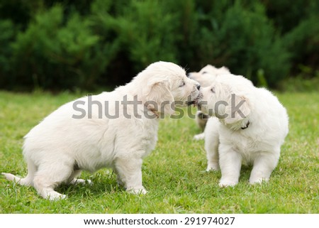 two puppies kissing each other - stock photo