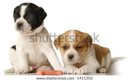 Two puppies wink in unison. (Captured purely by luck! No manipulation) - stock photo