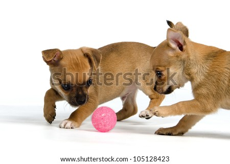 Two puppies with ball, isolated on white background - stock photo
