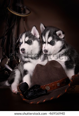 two puppies with cowboy hat - stock photo