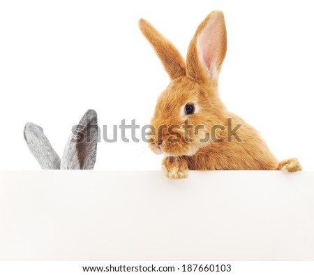 Two rabbit over blank sign, isolated on white background - stock photo