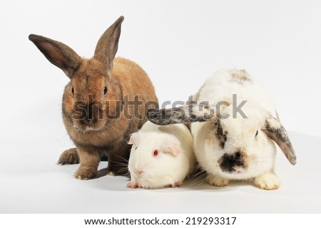 Two rabbits and a guinea pig, rat and family set. - stock photo