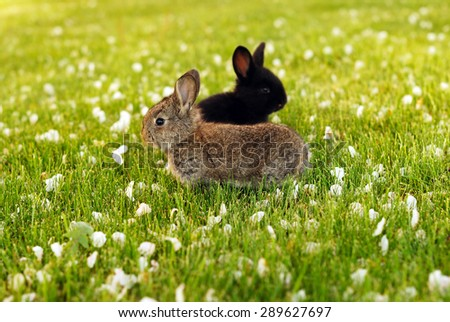 Two rabbits in the meadow - stock photo