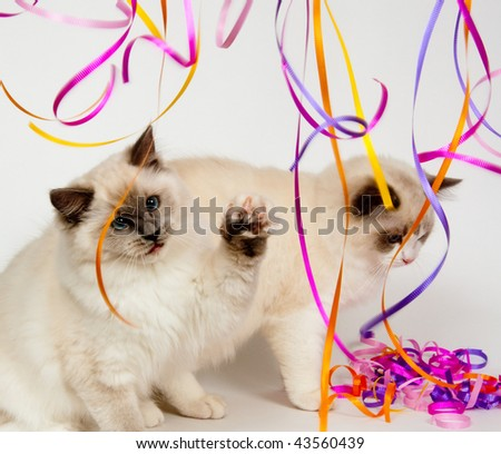 Two ragdoll kittens playing with colorful steamers - stock photo