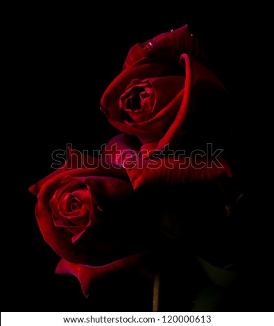 Two red roses in black background - stock photo