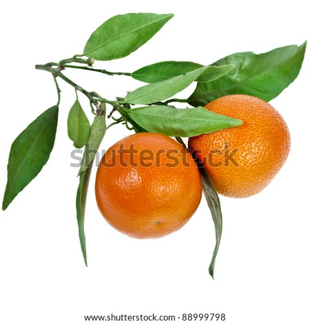 two ripe tangerines with leaves isolated on white background - stock photo