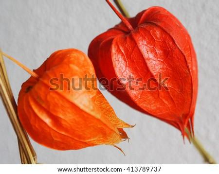 Two romantic dry flowers    - stock photo