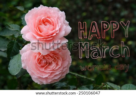 two roses in a figure 8 in the garden on a dark green background. International Women's Day. Eighth of March. Spring. - stock photo