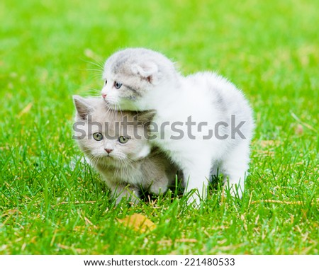 two sad kittens on green grass - stock photo