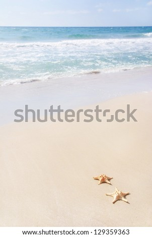 two sea-stars lying on sand beach against waves - stock photo