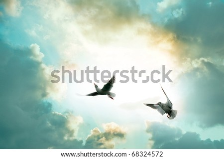 Two seagulls front of the sky - stock photo