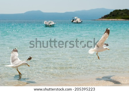Two seagulls on the beach - stock photo