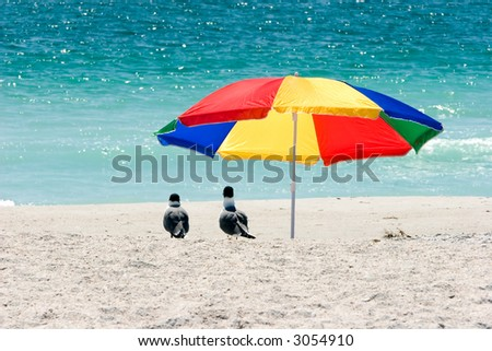 Two seagulls under a very colorful beach umbrella on the public beach in Treasure Island, Florida. - stock photo