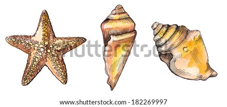 two seashells and starfish on white background - stock photo