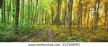 Two seasons in the forest summer and autumn  - stock photo