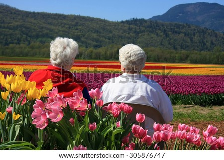 Two senior ladies seated outside, enjoying the view of the tulip fields.  - stock photo