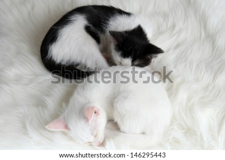 Two sleeping little kitten on white carpet - stock photo