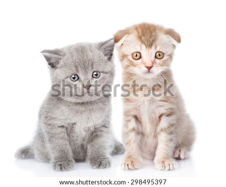 two small kittens looking at camera. isolated on white background - stock photo