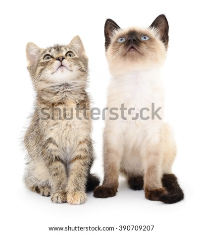 Two small kittens on a white background.  - stock photo