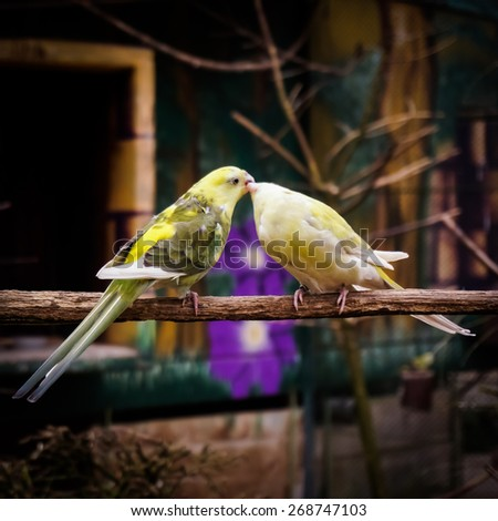 Two Small Parrots Kissing on Tree Branch - stock photo